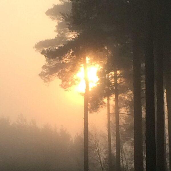 Bramshill Forest photo 3