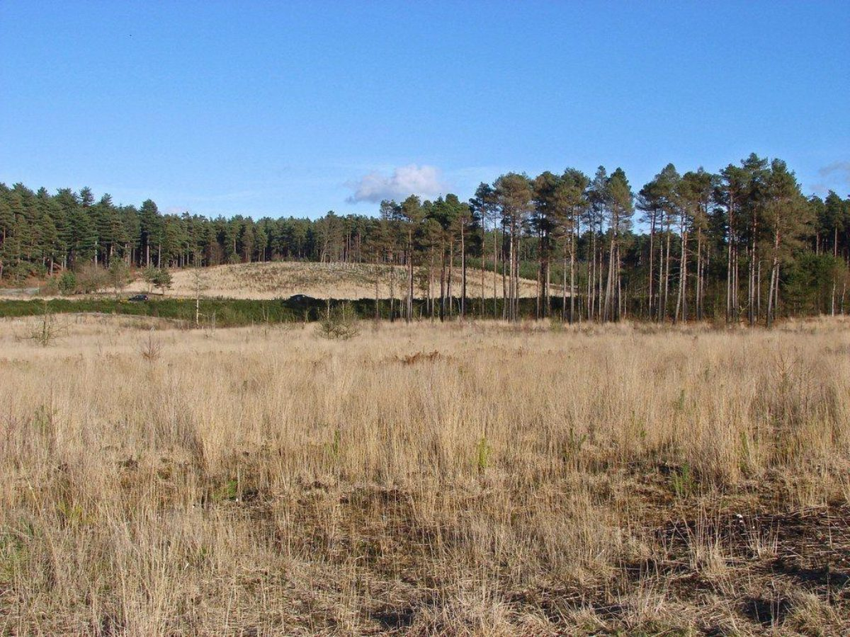 Bramshill Forest large photo 1