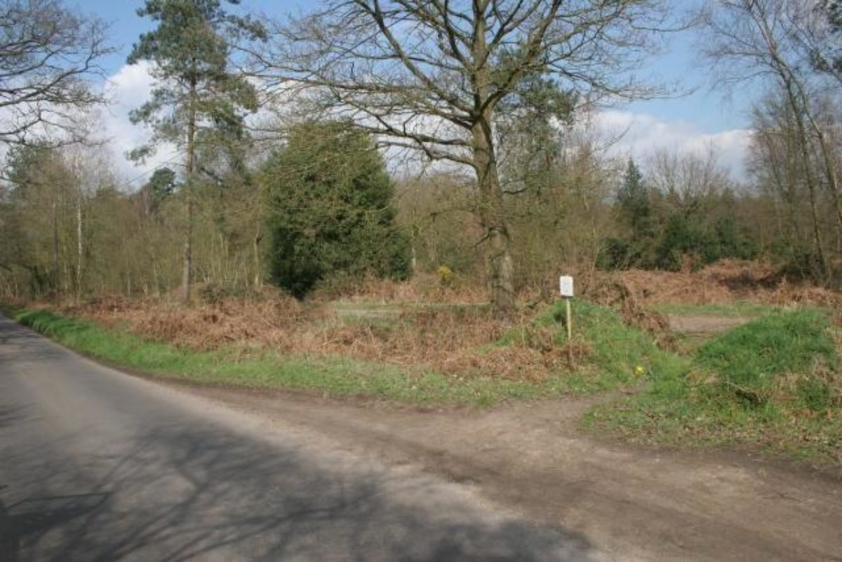 Bramshill Forest large photo 2