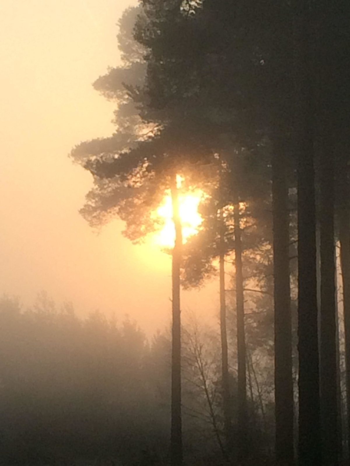 Bramshill Forest large photo 3