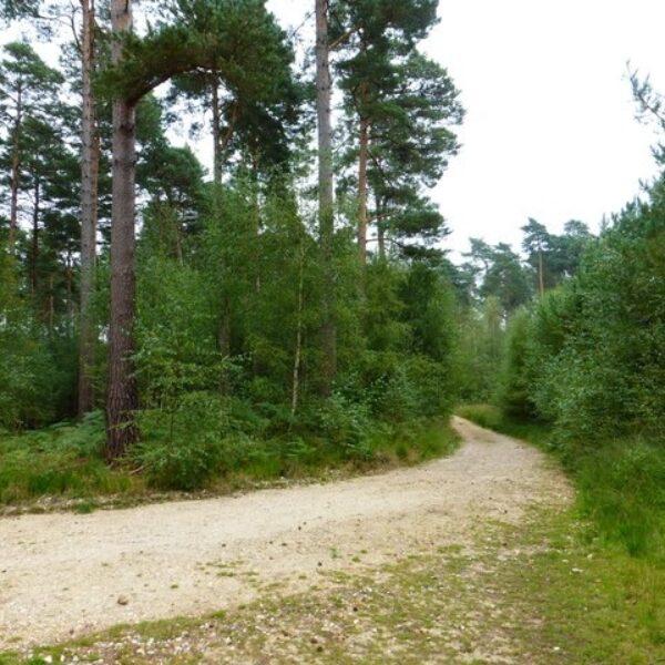 Bramshill Wood Common photo 2