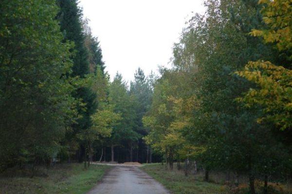 Bramshill Wood Commonphoto