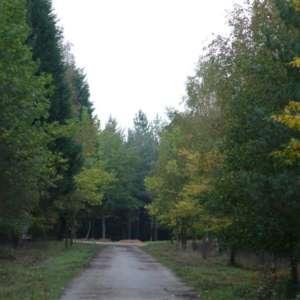 Bramshill Wood Common