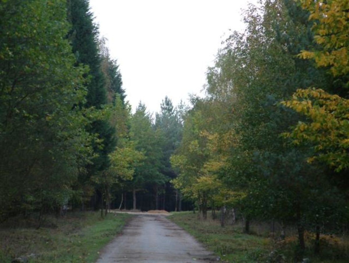 Bramshill Wood Common large photo 1