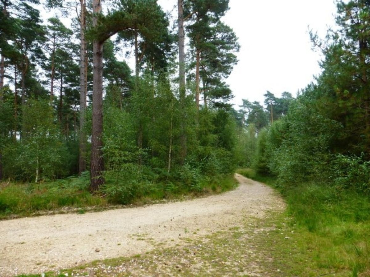 Bramshill Wood Common large photo 2