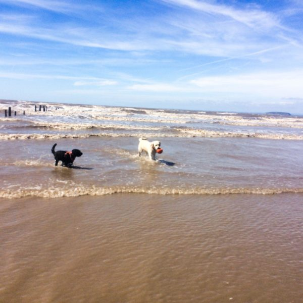 Dog walk at Brean Beach