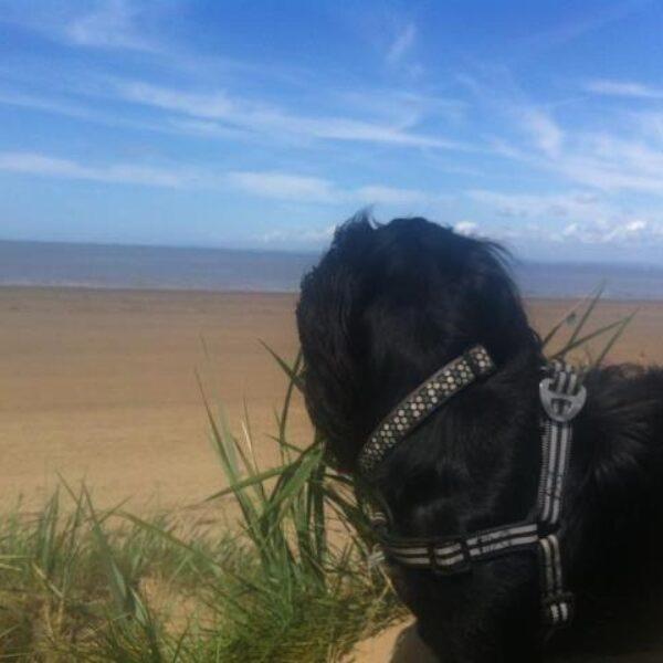 Dog walk at Brean Beach