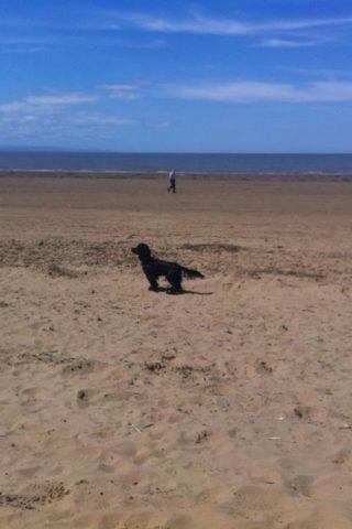 Dog walk at Brean Beach photo
