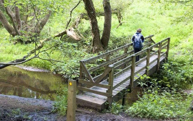 Brereton Country Park to the Swettenham Arms Dog walk in Cheshire