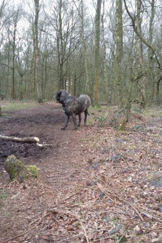 Dog walk at Brereton Nature Reserve photo