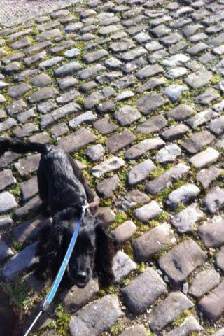 Dog walk at Bristol Historic Docks photo