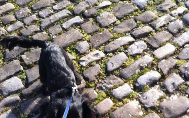 Bristol Historic Docks Dog walk in Bristol (City of)
