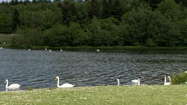 Dog walk at Broadwood Loch