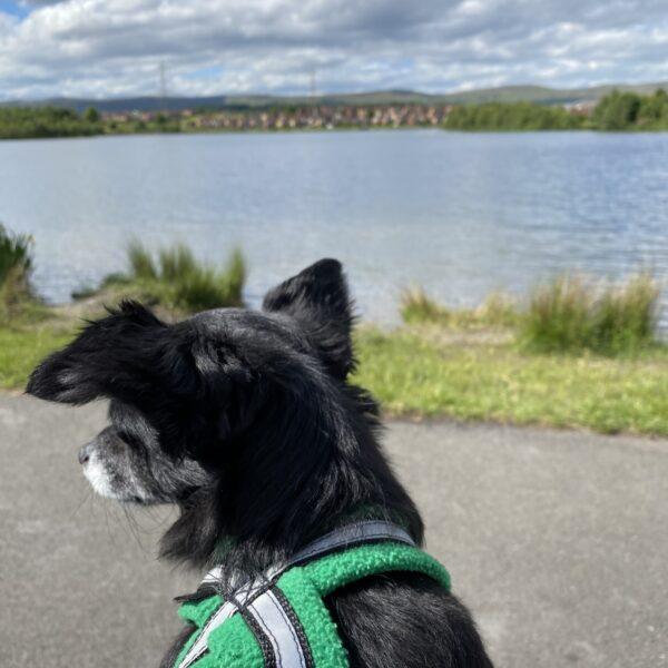 Broadwood Loch photo 5
