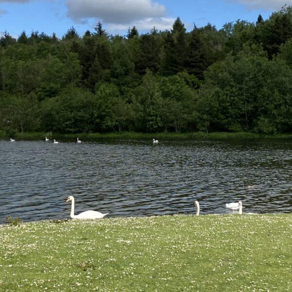 Broadwood Loch photo 1