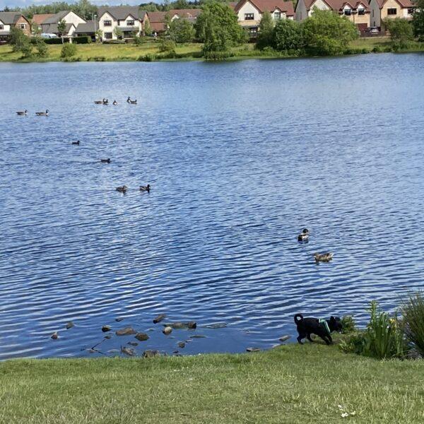 Broadwood Loch photo 11