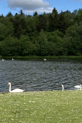 Dog walk at Broadwood Loch photo