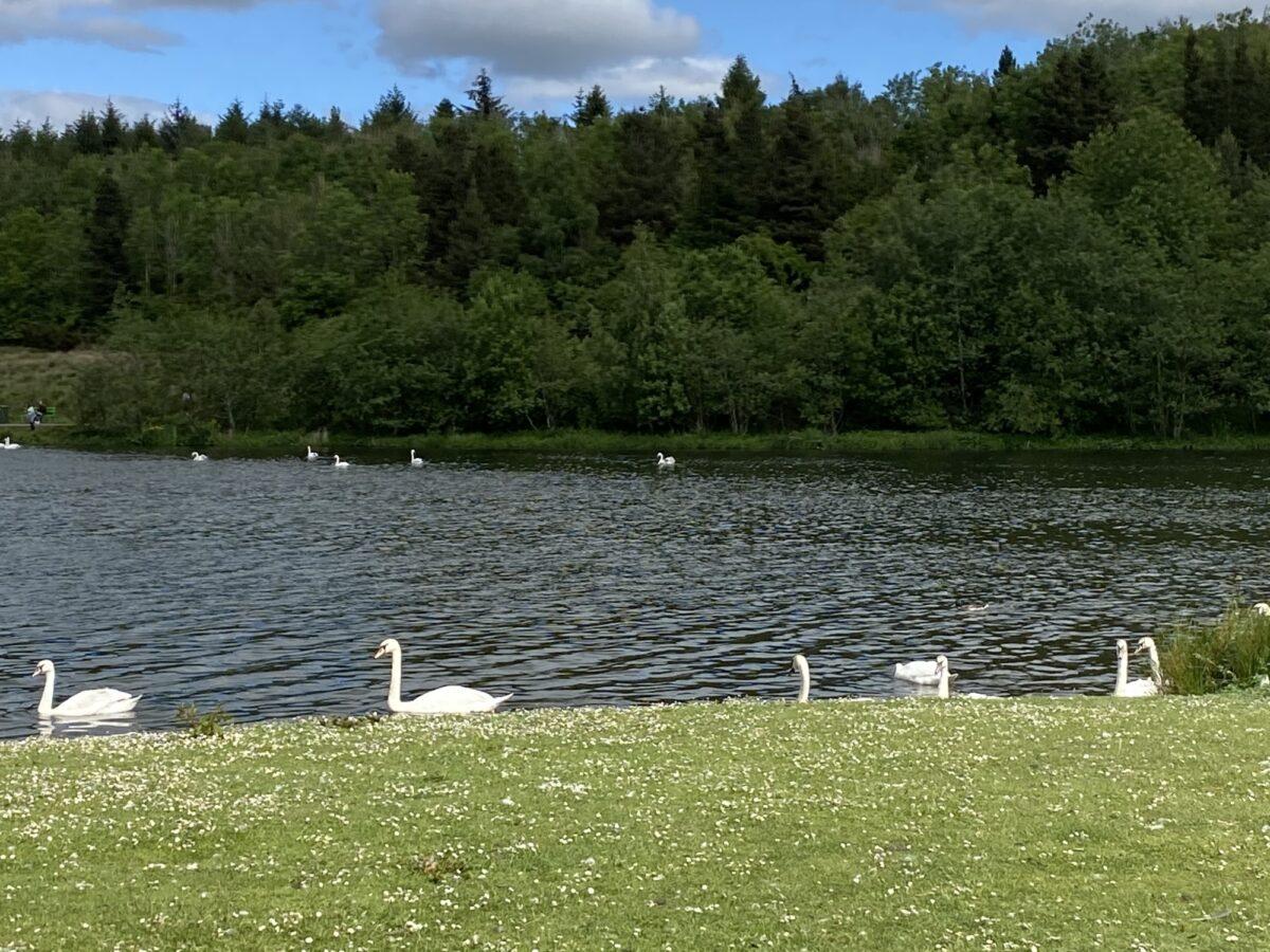 Broadwood Loch large photo 1