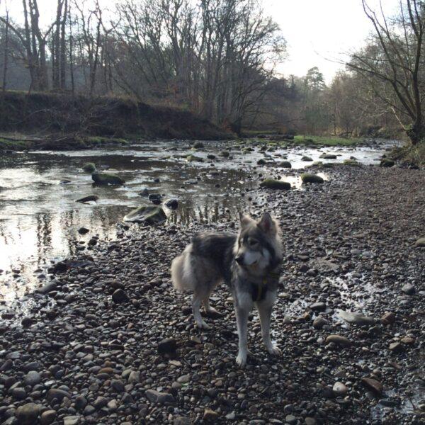 Dog walk at Brock Bottom