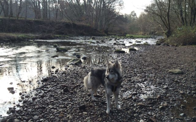 Brock Bottom Dog walk in Lancashire