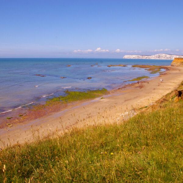 Dog walk at Brook Bay