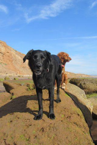 Dog walk at Brook Bay photo