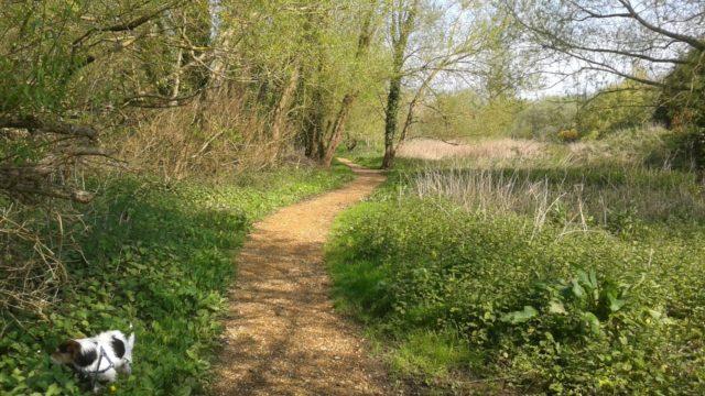 Dog walk at Brook Meadow Walk, Emsworth