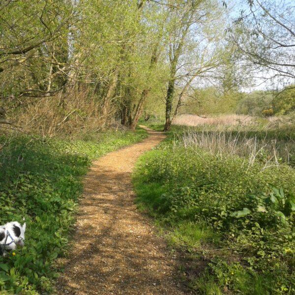 Brook Meadow Walk, Emsworth photo 1