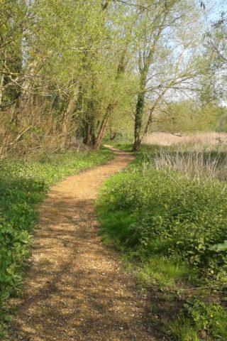 Dog walk at Brook Meadow Walk, Emsworth photo