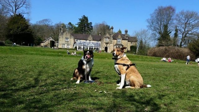 Dog walk at Bryngarw House
