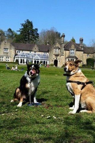 Dog walk at Bryngarw House photo