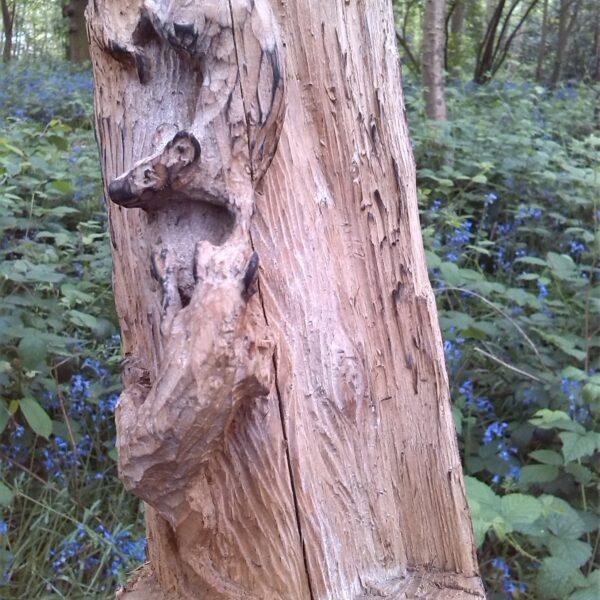 Dog walk at Bursted Woods