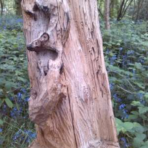 Bursted Woods