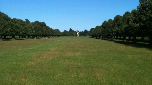 Dog walk at Bushy Park