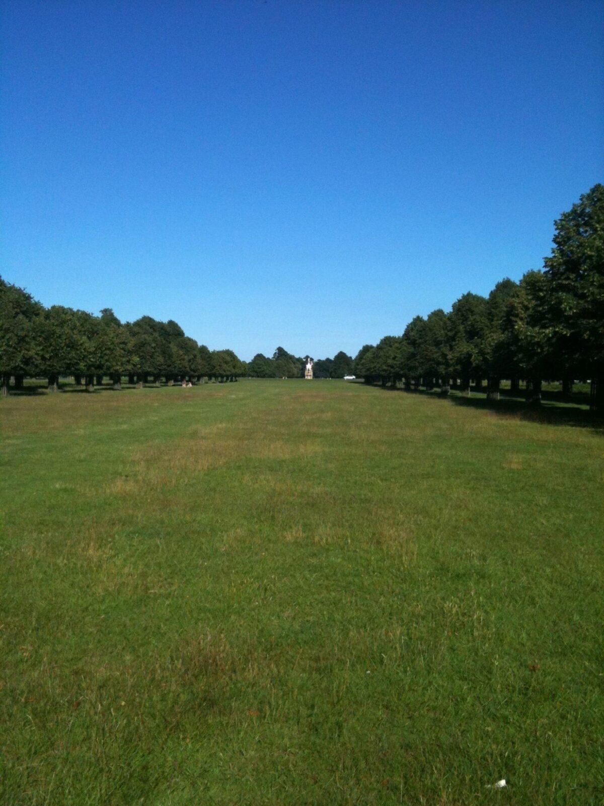 Dog Walk At Bushy Park Walkiees