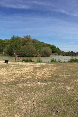 Dog walk at Cadman's Pool photo