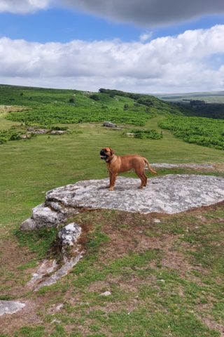 Dog walk at Cadover Bridge and the Dewerstone photo