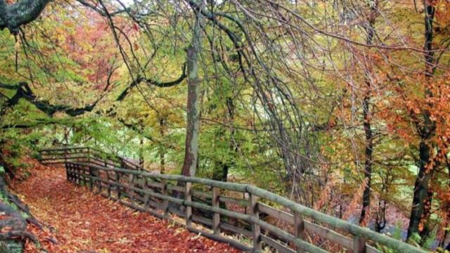 Dog walk at Calderglen Country Park