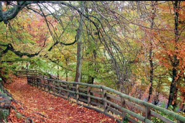 Calderglen Country Parkphoto
