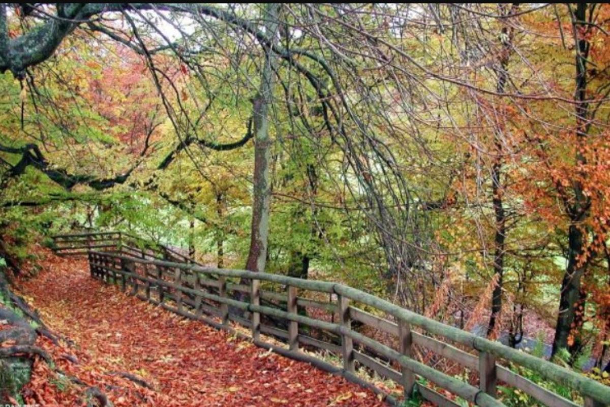 Calderglen Country Park large photo 1