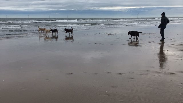 Dog walk at Cambois Beach