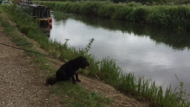 Dog walk at Canal Towpath Newbury