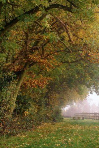 Dog walk at Capstone Farm Country Park photo