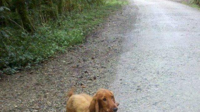 Dog walk at Cardinham Woods