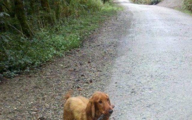 Cardinham Woods Dog walk in Cornwall