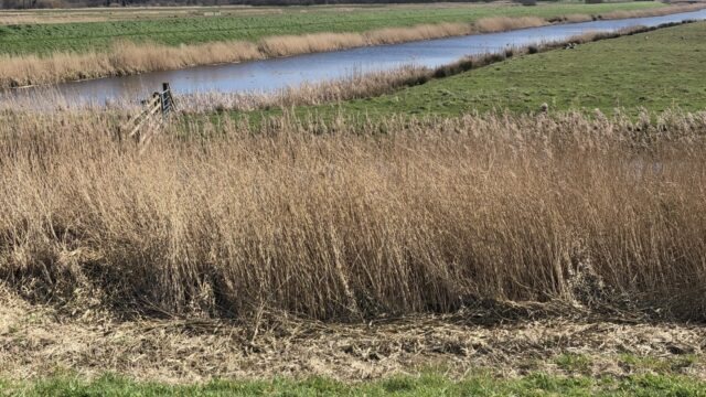 Dog walk at Carlton Marshes