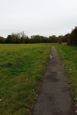 Dog walk at Carterton Medows photo
