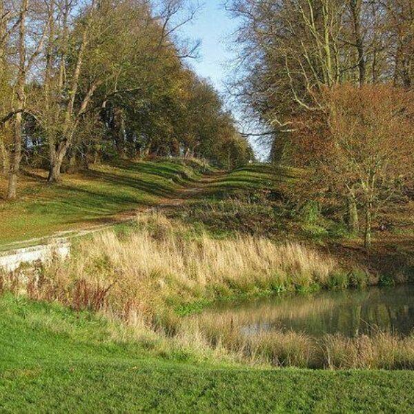 Dog walk at Castle Howard Arboretum