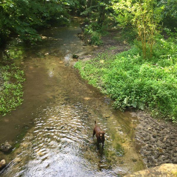 Dog walk at Cerne Abbas Giant Walk