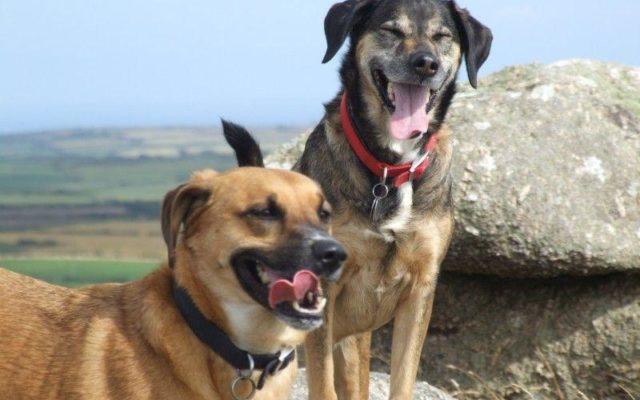 Chapel Carn Brea Dog walk in Cornwall